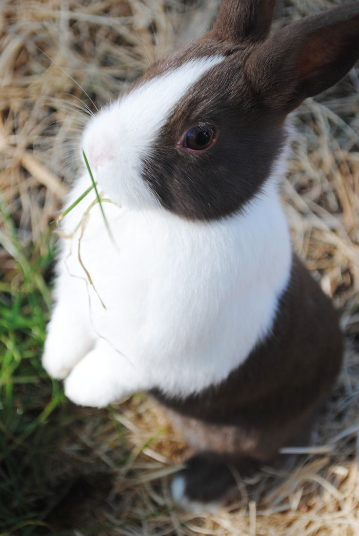 I found a little Dutch rabbit. He was the sweetest thing. Great personality. I named him Flibarrito.