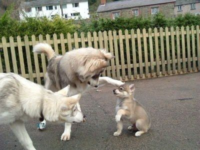 This puppy being knighted by his elders. | 61 Images Of Animals That Are Guaranteed To Make You Smile