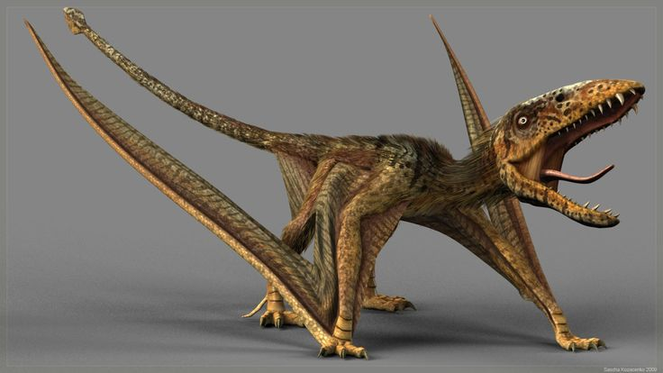 Dimorphodon walking- possibly the cutest dinosaur ever. Im assuming it was somewhat reptilian?