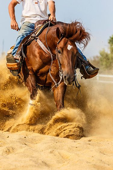 Reining is a western riding competition for horses where the riders guide the horses through a precise pattern of circles, spins, and stops. Photo by Barbara O'Brien