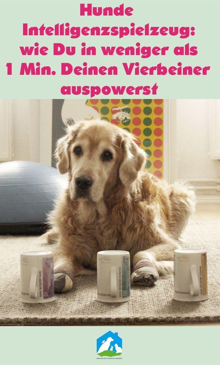 Hunde Intelligenzspielzeug: wie Du in weniger als 1 Minute Deinen Vierbeiner schnell und einfach auspowerst!