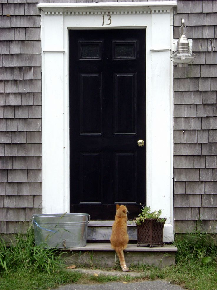 21 best front steps images on pinterest front doors for Cape cod front door