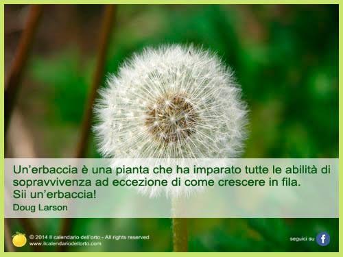 Un'erbaccia è una pianta che ha imparato tutte le abilità di sopravvivenza ad eccezione di come crescere in fila. Sii un'erbaccia! Doug Larson