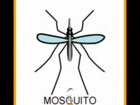 La canción del Mosquito (con pictogramas).wmv - YouTube