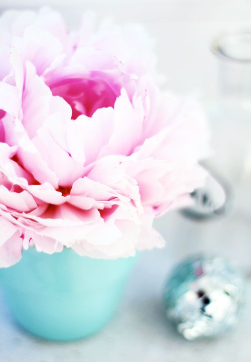 My two favorite colors, pale pink and turqouisePink Flower, Colors Combos, Romantic Flower, Room Colors, Little Flower, Blue Room, Pale Pink, Pretty Flower, Pink Peonies