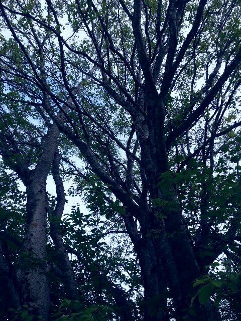 Trærne nede ved sjøen