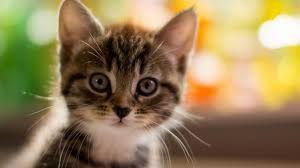 sevimli yavru kediler ile ilgili görsel sonucu