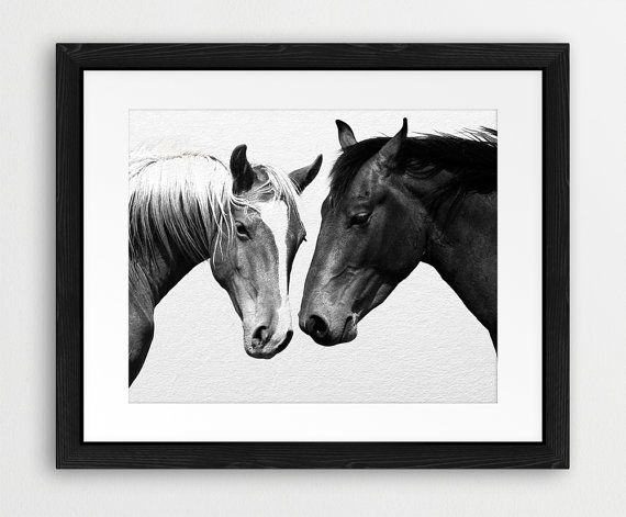 Horse Printable Horse Photography Black And White Wild by synplus