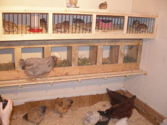 Quail && Chicken Housing.....http://www.backyardchickens.com/forum/uploads/18621_chicken_house_005.jpg