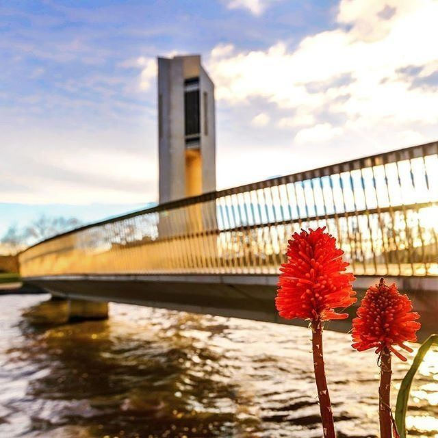 You might have seen this stunning architectural landmark by Lake Burley Griffin but did you know it is also an impressive musical instrument with 55 bronze bells, each weighing between seven kilograms and six tonnes? The National Carillon was a gift of the British Government to the people of Australia in celebration of the 50th anniversary of the National Capital. Photo by Instagrammer @carolelvin. #visitcanberra #onegoodthingafteranother