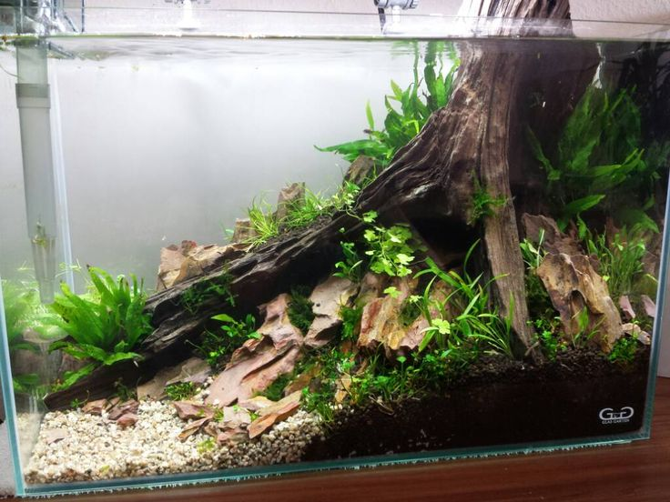 Freshwater Aquarium Design Ideas view in gallery stunning fish tank design that really kicks in with the green 28 modern fish tanks that 690 Best Images About Aquarium Ideas And Design On Pinterest Aquarium Driftwood Aquarium Decorations And Saltwater Fish Tanks