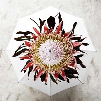 Clinton Friedman protea brolly from Africandy