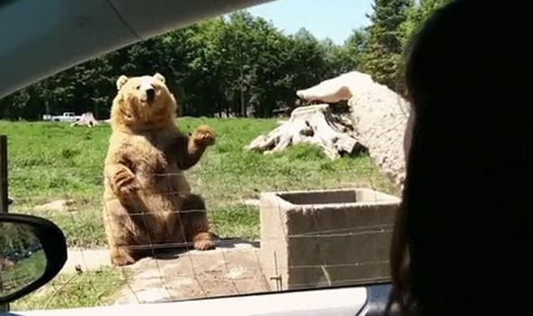 You'll NEVER guess what happens to this woman after pulling up next to a DEADLY brown BEAR