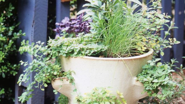 How to grow herbs- basic overview.