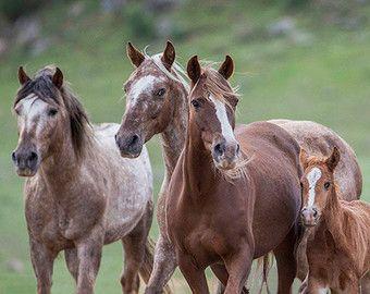 Bronzen krijger en zijn familie  Fine Art paard Photograph