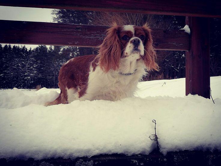 Bonie and snow.. ❤💖