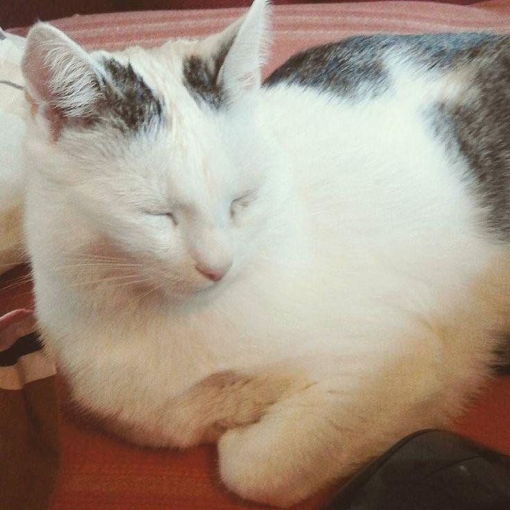Cute cat photo #cat #cutecat #instacat #kawaiicat