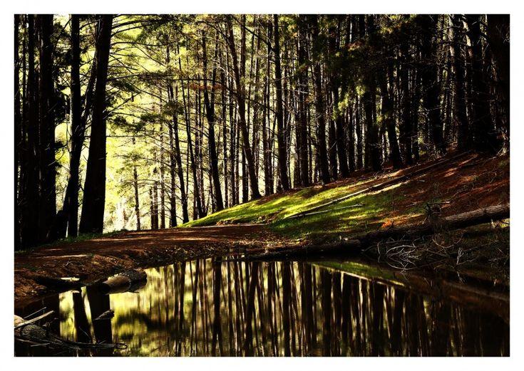Durch den Wald | Fotografie | Echte Postkarten online versenden | MyPostcard.com