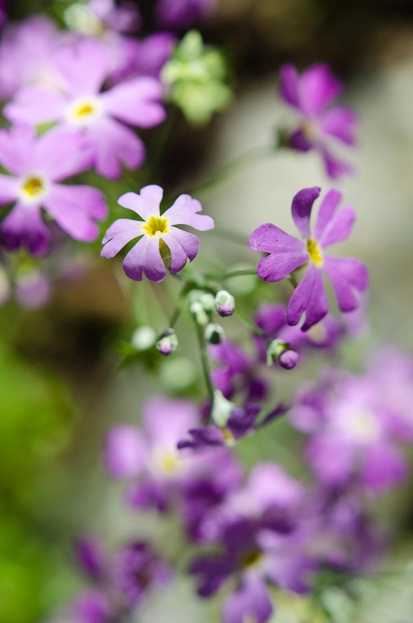 My favorite Spring Wild Flower