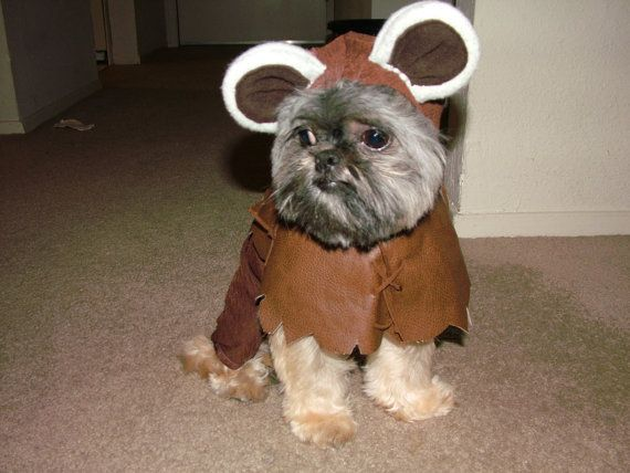 star wars halloween have fun dressing up your pet this year with an adorable star war halloween ewok costume this totally geeky pet costume is sure to