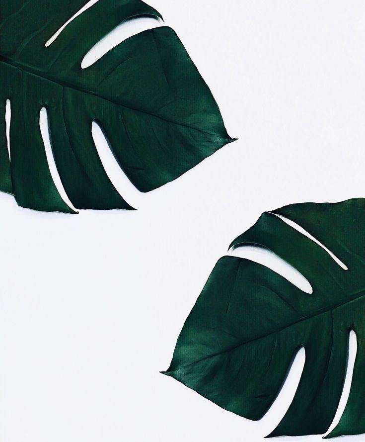 Tropical leaf love! #plants #flatlay