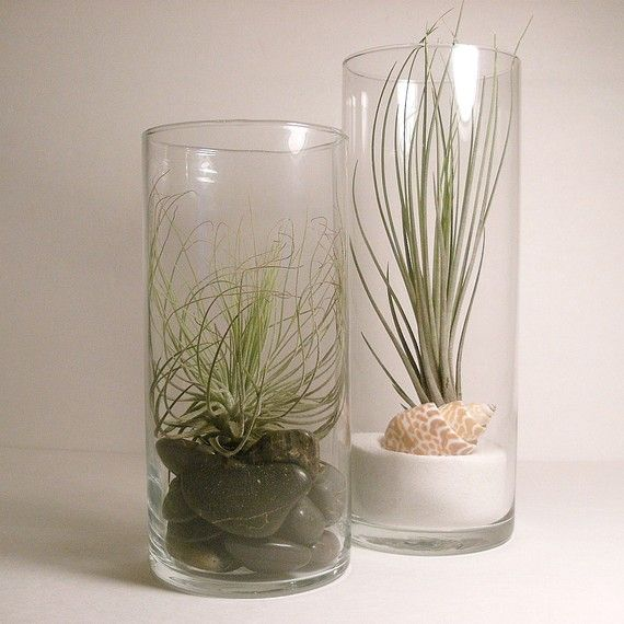 66 best images about cylinder vase ideas on pinterest for Air vase