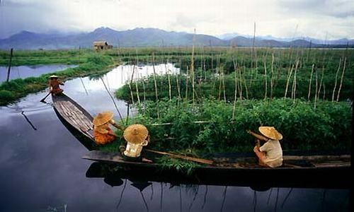 Jardín flotante en el lago Inle, Myanmar (Birmania)