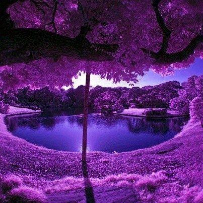 perfect purple.