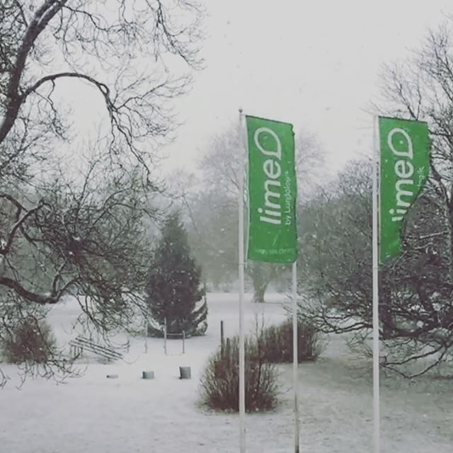Branding, graphics, project management | Our green flags waving bravely in the snowstorm. ❄️🌪💪 | 2017
