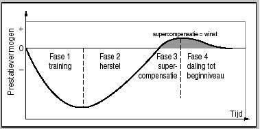 Figuur 1: Het lichaam reageert op een specifieke manier op inspanning. Deze reactie kan men in 4 stappen opdelen.