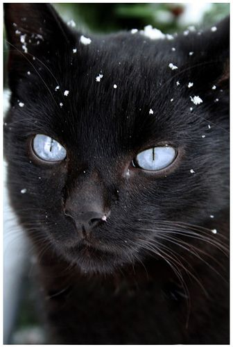 Black cats are beautiful.