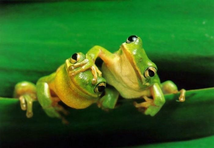 I love frogs!: Animals, Nature, Funny, Reptile, Frogs, Photo, Friend