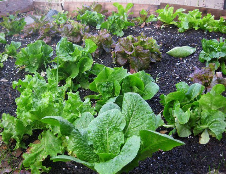 67 best images about vegetable garden on pinterest for Vegetable garden soil