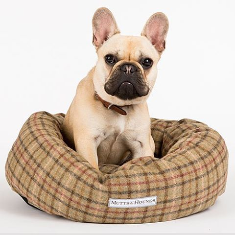 43 best dog beds images on pinterest | dog beds, donuts and tweed