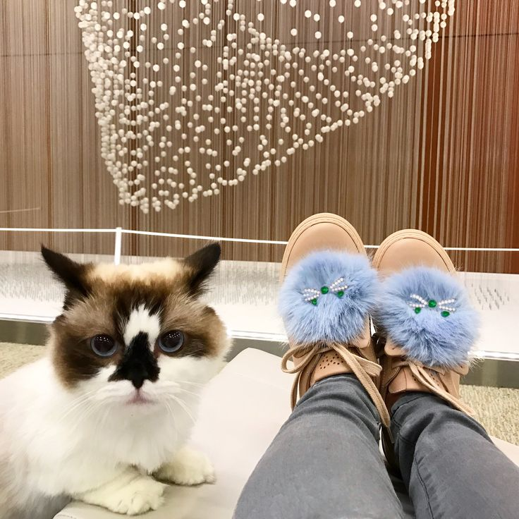 I spy with my little eye 2 fluffy cats... #josefinasportugal