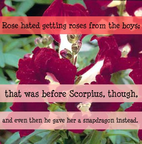 """""""A snapdragon?""""  """"Well, I figured that you get roses all the time, and you were probably sick of them. And…and you make me think of a snapdragon, not a rose."""" He paused. """"You like it?"""" She squeezed his hand in reply."""