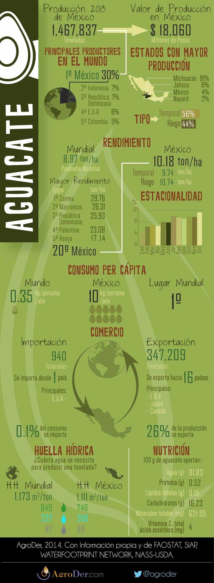Infografía - Aguacate en México, 2013.