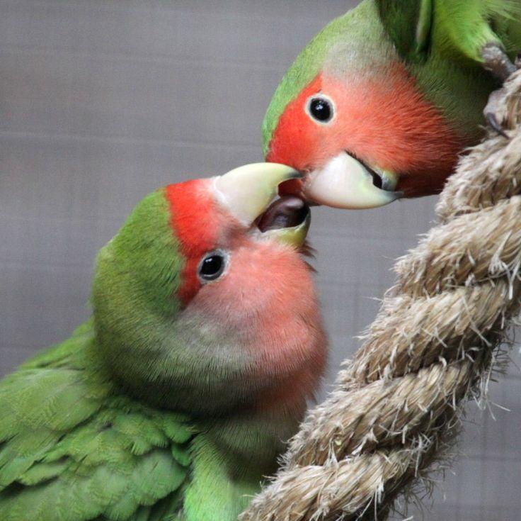 lovebird dating