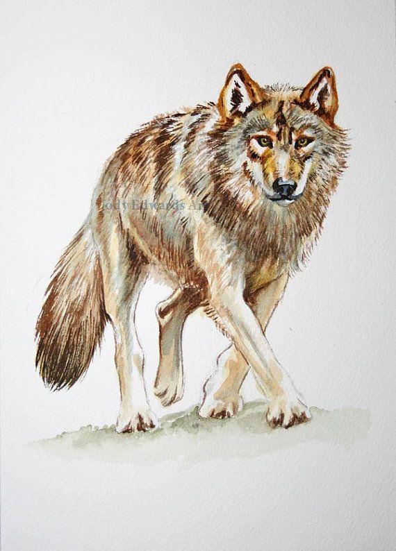 Wolf schilderij originele aquarel studie