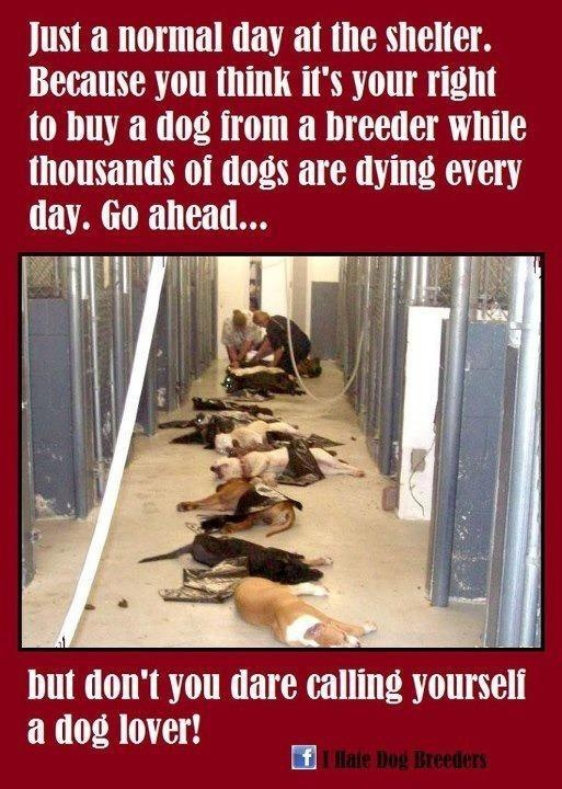 PLEASE, PLEASE, PASS THIS ON! It is a very important issue and is VERY heartbreaking. :(It's hard to look at this, please don't support puppy mills, spay & neuter your pets