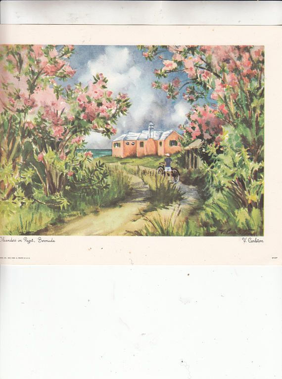 1950 S Vintage Print Bermuda Oleanders In Paget From A