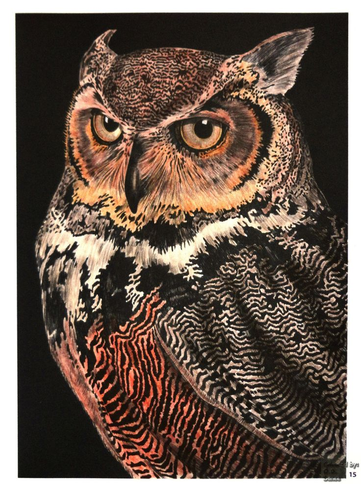 Tim Jeffs -  Intricate Ink Animals in Details volume 1 Great Horned Owl 1   Coloured with Giotto Stilnovo Skin tones