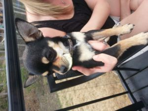 Date Listed 26-Jun-13 Last Edited 26-Jun-13 Price Free Address Grande Prairie, AB, Canada  View map Black and tan Chihuahua. Goes by the name benny .Lost in mission. last seen going towards menchies. There is a reward!! 780-933-7006