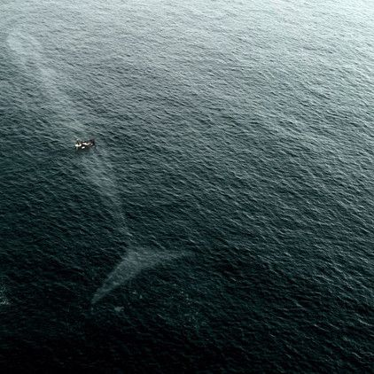 El rorcual azul, más conocido como 'ballena azul'. El océano alberga a los animales más grandes del planeta. En muchas ocasiones el inmenso tamaño de algunos de ellos es razón suficiente para entrar en pánico