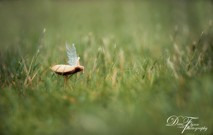 Fairy Sitting On A Mushroom, Spotted At My