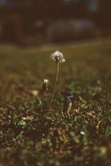 Dandelion White ________ #adventure #dandelion #wow #travel #vintage #miniature #nature #grass #sun #look #plant #foliage