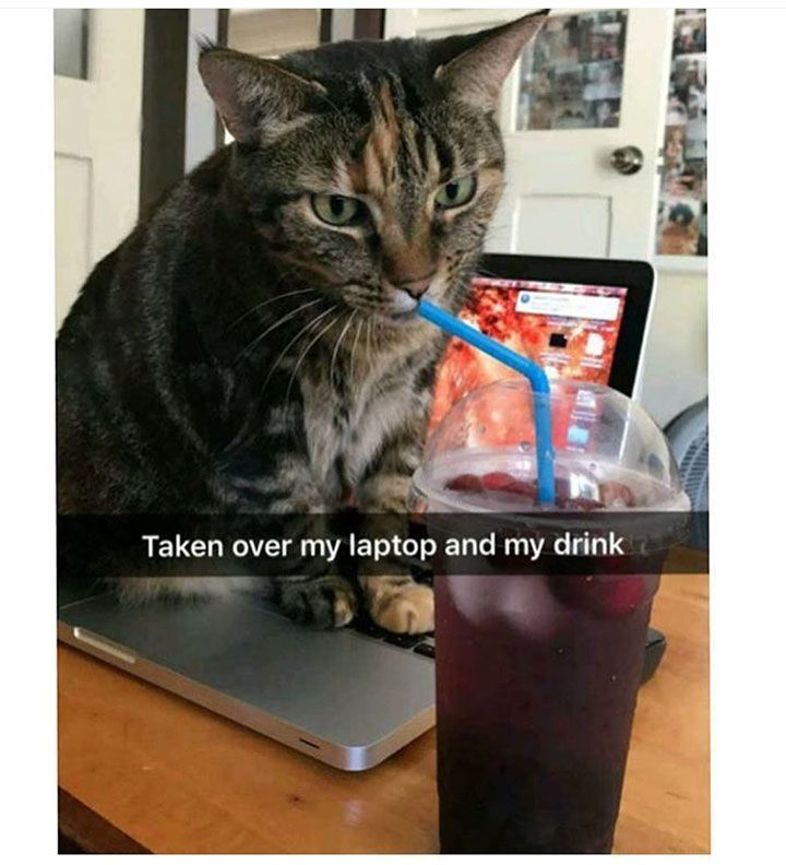 Really Funny Pictures That Make You Laugh Out Loud - 30