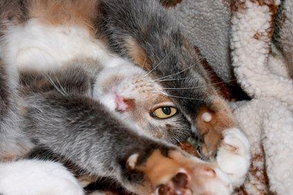 Solução caseira para remover urina de gato da madeira   eHow Brasil