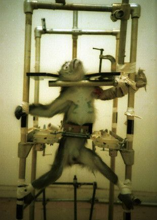This is an example of an Animal Testing Laboratory Accused of Ongoing Cruelty, it has a harsh image but hopefully that will strike peoples curiosity and get them to stop using products that animal test (and then stop animal testing!