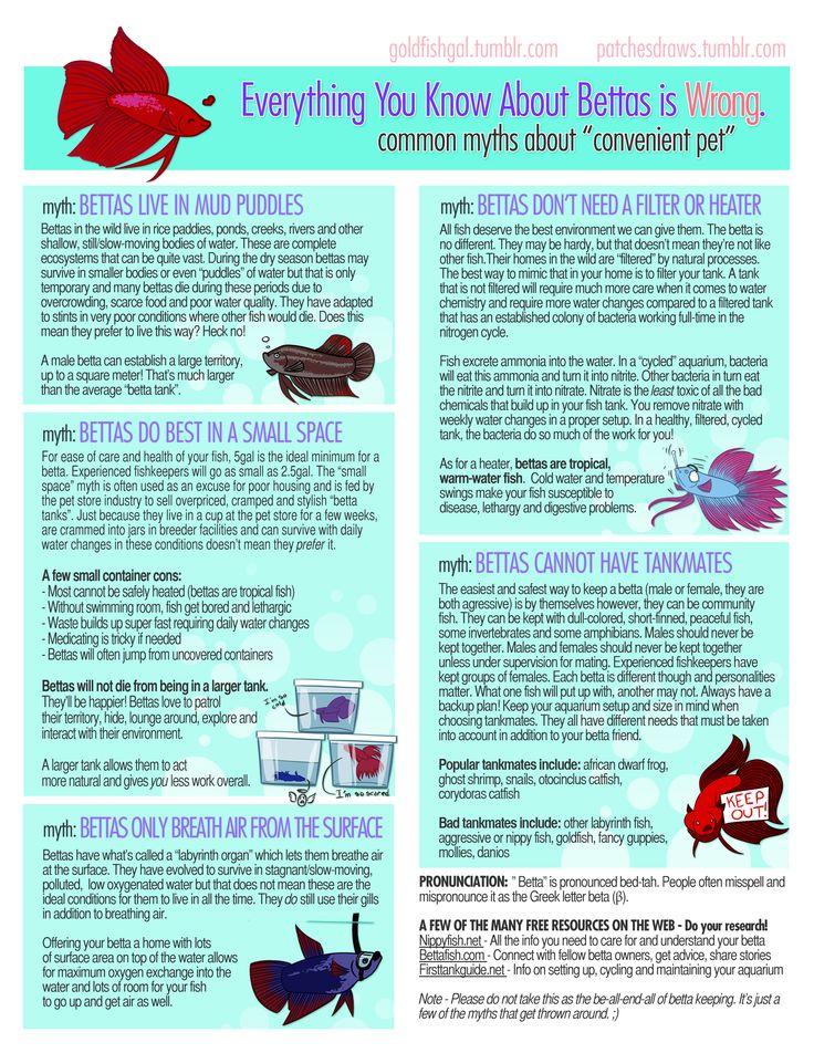 25 best ideas about vase fish tank on pinterest betta for Betta fish water heater